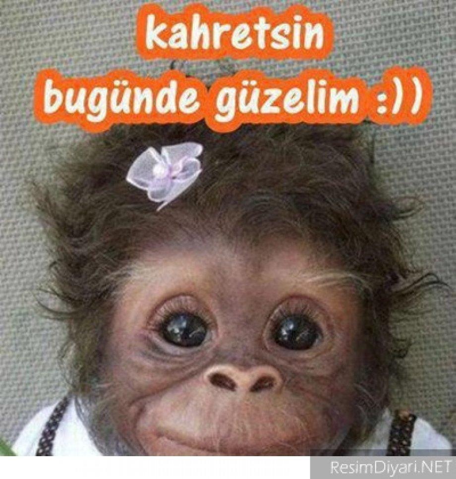 Komik Resimler - Foto Galeri - Amasyahaber.Com Amasyahaber.net